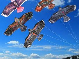 Paukščių baidyklė aitvaras - nuotraukos Nr. 2