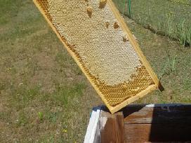 Parduodu 2019 išsuktą natūralų bičių medų!