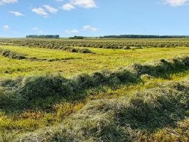 Žolių sėklos, tarpinių kultūrų mišiniai