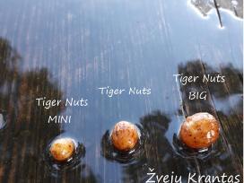 Šutinti tigriniai riešutai Mini