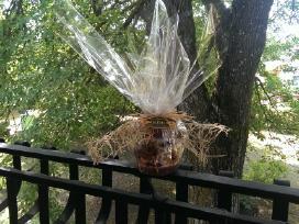 Naturalus medus iš kaimo sodybos - nuotraukos Nr. 2