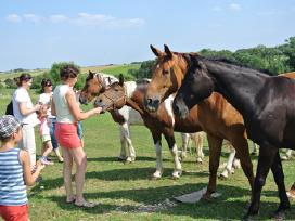 Parduodu pigiai kersus arklius - nuotraukos Nr. 2