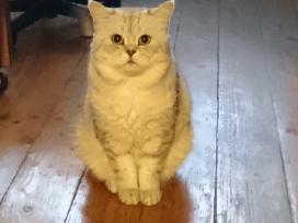 Skotu staciaausis iesko katytes drauges :)