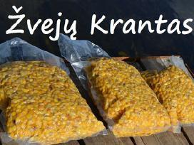 Šutinti kukurūzai