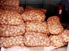 Maistinės bulves,ir kitos daržovės