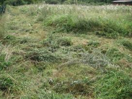 Zoles Pjovimas, Krumu -Gyvatvoriu kirpimas - nuotraukos Nr. 2