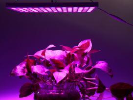 Lempos ir panelės augalų daiginimui ir augimui - nuotraukos Nr. 2