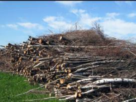 Skubus apleistų žemės sklypų tvarkymas, krumų pjov