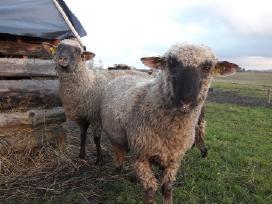 Parduodu avis