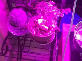 Pilno spektro 200 Led lempa augalų auginimui - nuotraukos Nr. 3