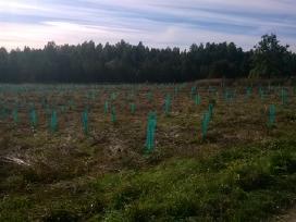 Greitai, kokybiškai, pjauname žolę, krūmus.
