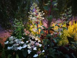 Tujos, pušys, kadagiai ir kt. augalai