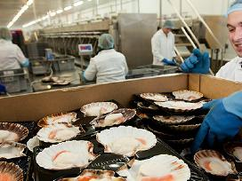 Nemokamas įdarbinimas krevečių fabrike Škotijoje