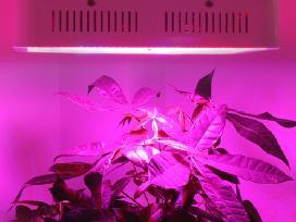 Pilno spektro augalų Led lempa 800w