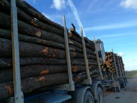 Malkos miškovežiu - nuotraukos Nr. 2