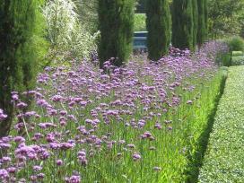 Esparcetas, facelija, barkūnas, medingieji augalai - nuotraukos Nr. 3
