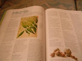 Knygos - nuotraukos Nr. 4