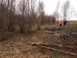 Žolės, krūmu pjovimas, apleistų sklypų tvarkymas