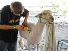 Avių kirpimo mašinėlės - žirklės Naujos su Akcija - nuotraukos Nr. 2
